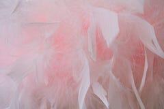 Textur med vita fjädrar för rosa färger och Arkivbilder