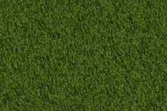 Textur Moss royalty free stock photo