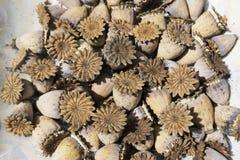 Textur natural construido de flores secadas Foto de archivo libre de regalías