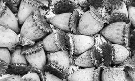 Textur naturale sviluppato dei fiori secchi Immagini Stock Libere da Diritti