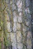 Textur och bakgrund av det bruna skället Sörja i skogen Royaltyfria Bilder
