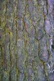 Textur och bakgrund av det bruna skället Sörja i skogen Royaltyfri Foto