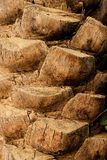 Textur och bakgrund för naturligt gammalt datumträd Wood Royaltyfria Foton