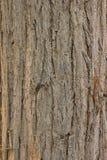 Textur och bakgrund för naturligt gammalt träd Wood Arkivbild