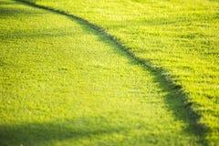 Textur och bakgrunder för grönt gräs Royaltyfri Foto