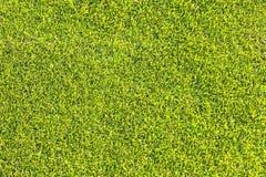 Textur och bakgrunder för grönt gräs Royaltyfria Foton