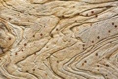 Textur och modeller i ett avsnitt av utsatt sandsten vaggar royaltyfri foto
