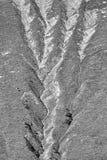 Textur på bergsidan, Ecrins, Delfinato, Frankrike, BW Royaltyfri Bild