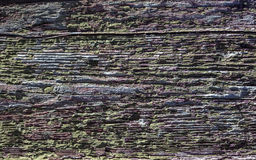 textur ridit ut trä Arkivfoto