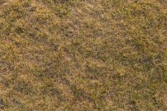 Textura à terra com grama seca e os topetes pequenos, raros de plantas verdes imagem de stock