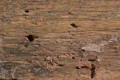 Textura à terra/textura de madeira/textura da pedra Fotos de Stock
