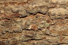 Textura a árvore de casca imagens de stock