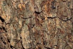 Textura a árvore de casca imagem de stock royalty free