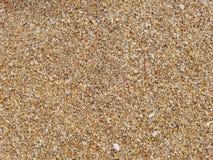 Textura áspera de la arena Imágenes de archivo libres de regalías