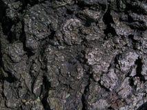 Textura áspera de la corteza del ` s del árbol, primer Fotos de archivo