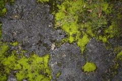 Textura áspera velha musgoso da superfície da pedra Imagem de Stock Royalty Free