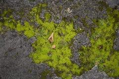 Textura áspera velha musgoso da superfície da pedra Foto de Stock