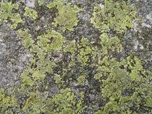 Textura 1 da rocha Imagens de Stock