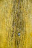 Textura. Fotos de Stock