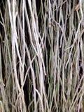 Textura Foto de archivo libre de regalías