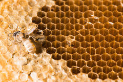 Textura abstracta de la cera de la abeja Fotos de archivo libres de regalías