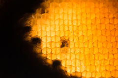 Textura abstracta de la cera de la abeja Imágenes de archivo libres de regalías