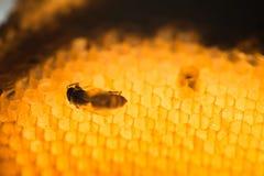 Textura abstracta de la cera de la abeja Imagen de archivo