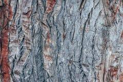Textura abstrata colorida do teste padrão da casca de árvore foto de stock