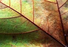 Textura abstrata da folha Fotografia de Stock