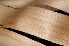 Textura abstrata da madeira da fronda da palma Fotografia de Stock Royalty Free