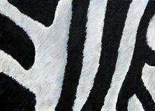 Textura abstrata da pele do ` s da zebra Foto de Stock