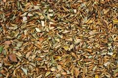 Textura abstrata do fundo das folhas fotografia de stock