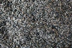 A textura abstrata do fundo de sementes de girassol Imagens de Stock Royalty Free