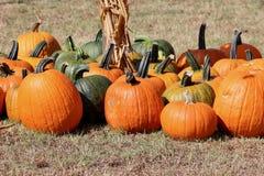 Textura, acción de gracias o Halloween del fondo de la caída del remiendo de la calabaza Fotos de archivo