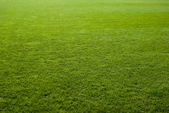 Textura agradável da grama verde