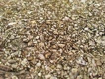 Textura agregada da rocha Imagens de Stock