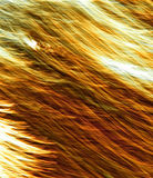 Textura alaranjada #233 Fotografia de Stock Royalty Free