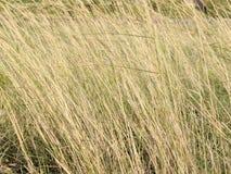 Textura alta seca de la hierba fotos de archivo libres de regalías