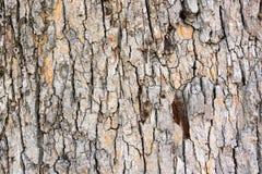 Textura altamente detallada de la corteza de árbol Imagenes de archivo