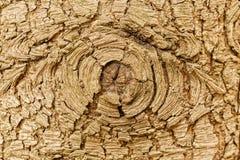 Textura altamente detallada de la corteza de árbol Fotos de archivo