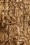 Textura altamente detallada de la corteza de árbol Imágenes de archivo libres de regalías