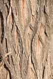 Textura altamente detallada de la corteza de árbol, fondo Imagenes de archivo