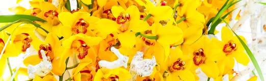 Textura amarela bonita do fundo da flor da flor da orquídea fotografia de stock