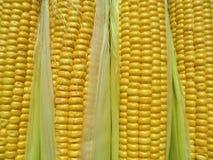 textura amarela do milho, vegetais Imagens de Stock