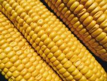 textura amarela do milho, vegetais Fotos de Stock