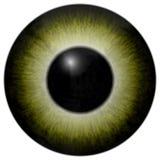 Textura amarela e verde do globo ocular ilustração royalty free