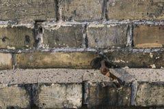Textura amarela velha do close up do tijolo Fotografia de Stock Royalty Free