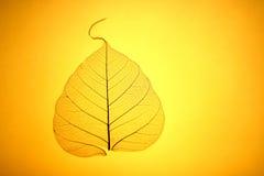 Textura amarilla de la hoja Foto de archivo libre de regalías