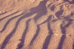 Textura amarilla de las dunas de arena con las sombras azules profundas imagen de archivo libre de regalías