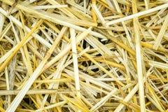 Textura amarilla seca del fondo de la hierba de la paja después de la más havest Fotografía de archivo libre de regalías
